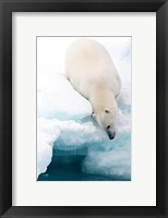 Framed Arctic Composition