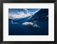 Framed Humpback Whale And The Sky