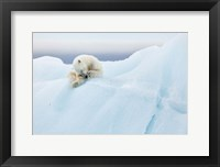 Framed Polar Bear Grooming
