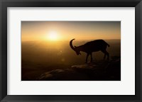 Framed Desert Wanderer