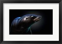 Framed Seal