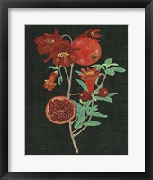 Framed Pomegranate Study I