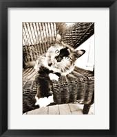 Framed Kitty IV
