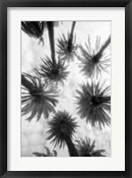 Framed Amongst the Palms
