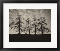 Framed Park Trees