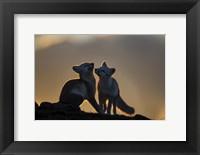 Framed Arctic Fox