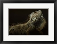 Framed Iguana Profile