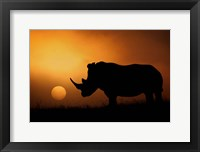 Framed Rhino Sunrise