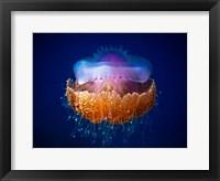 Framed Fried Egg Jellyfish