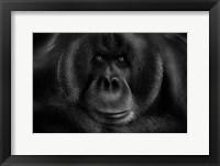 Framed Maurice