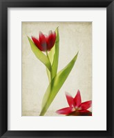 Framed Parchment Flowers II