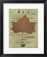 Framed Autumn Leaf II