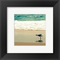 Framed Seagull on Beach