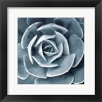Framed Blue Echeveria I