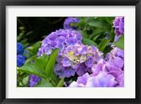 Framed My Garden Blooms