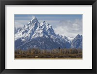 Framed Horse In Front Of The Grand Teton