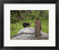 Framed Bear Cub On Rock