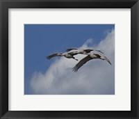 Framed Sandhill Crane 3 Oil Paint