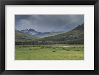 Framed Yellowstone Bison With Rainbow
