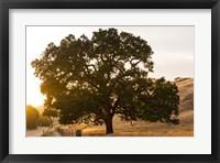 Framed Roadside Oak