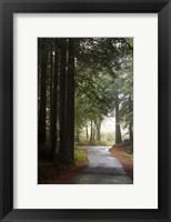 Framed Forest Road
