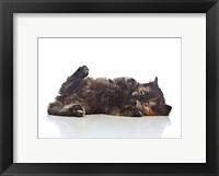 Framed Kittens 31