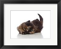 Framed Kittens 32