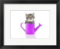 Framed Kittens 34