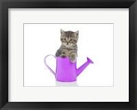 Framed Kittens 35
