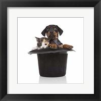 Framed Puppies 52