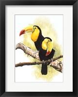 Framed Toucans