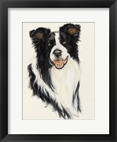 Framed Border Collie