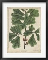 Framed Oak Leaves & Acorns I
