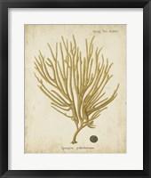 Framed Esper Antique Coral IV