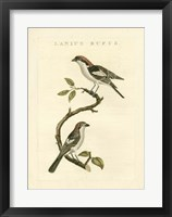 Framed Nozeman Birds I