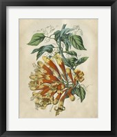 Framed Tropical Beauty II