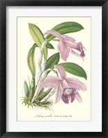 Framed Lavender Orchids II