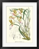 Framed Lavender Orchids IV