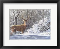 Framed Winter Whitetail