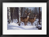 Framed Zone 1 Whitetail