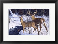 Framed Zone 2 Whitetails