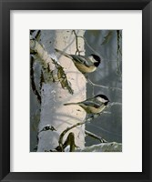 Framed Chickadees At Dawn