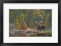 Framed North Country Moose
