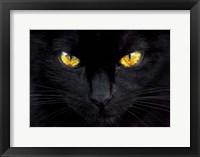 Framed Hypnotist of the Night