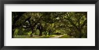 Framed Southern Canopy