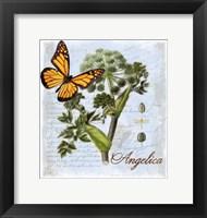 Framed Angelica Herb