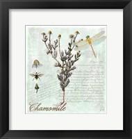 Framed Chamomile Herb