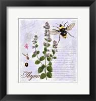 Framed Thyme Herb