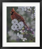 Framed Cardinal Spring Blossoms