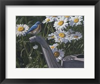 Framed Bluebird Daisies